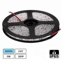 Fita de 600 LEDs SMD3528 IP65 24VDC 36W Branco Frio 6000K com Silicone - Rolo de 5.0m