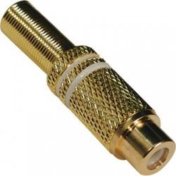Ficha RCA Fêmea Extensão 6mm - Dourada/Branca